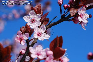 https://www.digitalphoto.pl/foto_galeria/2479_2007-0218.JPG